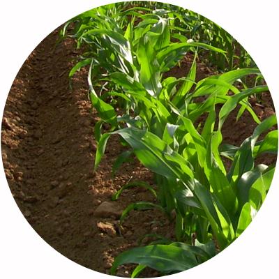 Productos-especiales-a-pedido-agricultura