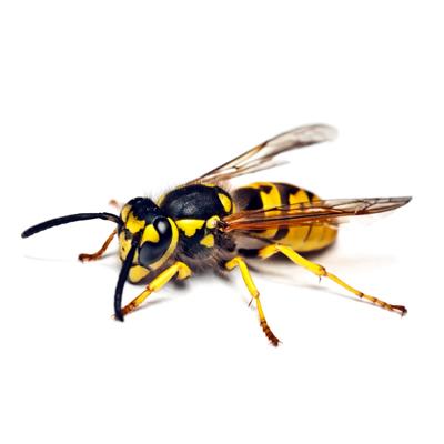 control-de-insectos-voladores